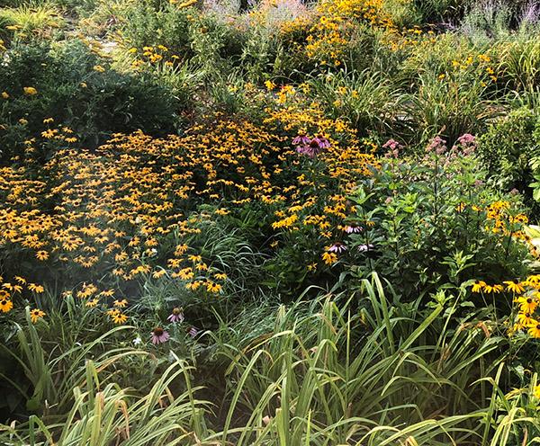 Image of Susan's garden