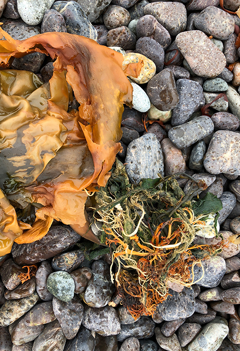 Image of found seaweed and stones on Jasper Beach