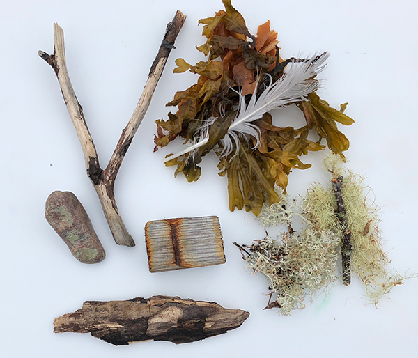 Image of found seaweed and stones