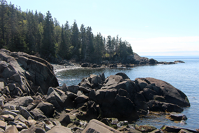 Image of Quoddy Head State Park