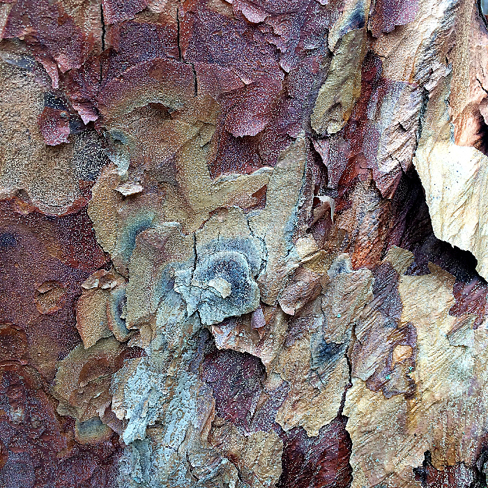 Image of Paperbark Maple Bark