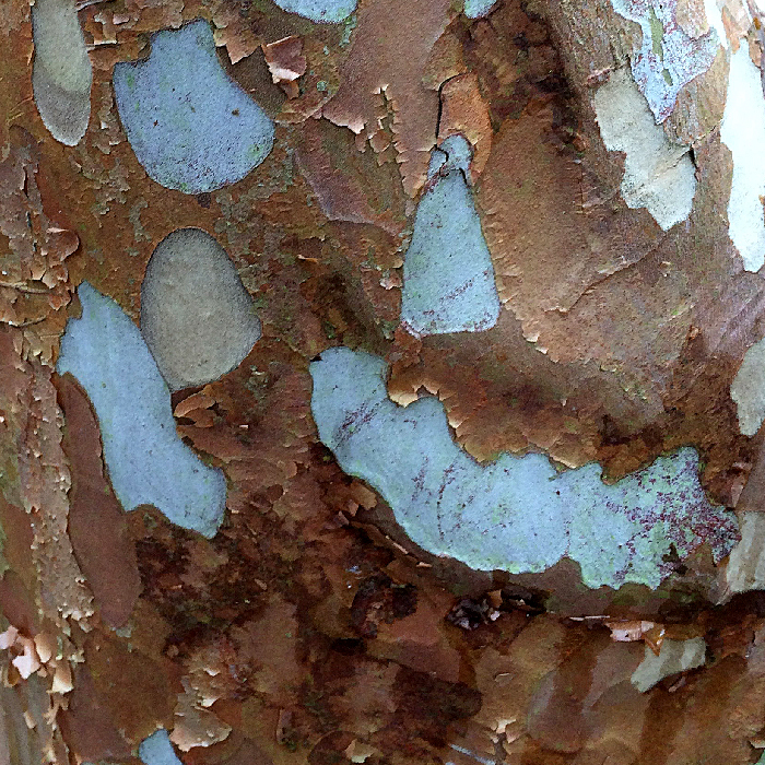 Image of Bark
