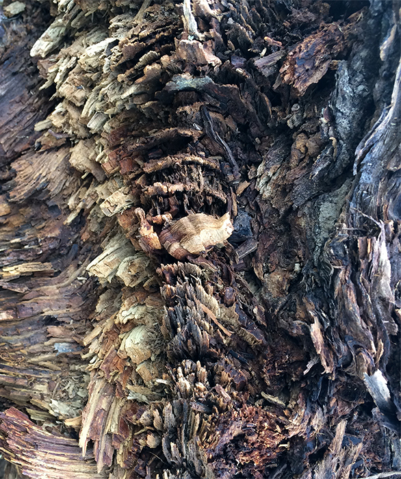 Image of twisted bark