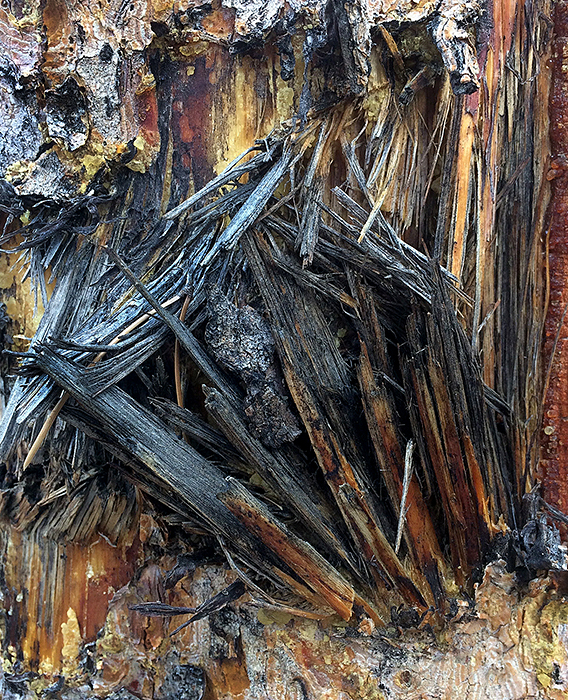 Image of torn bark.