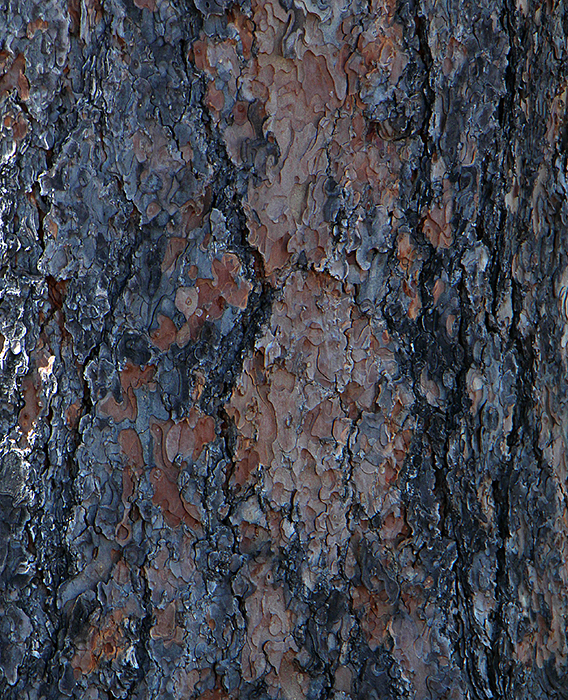 Image of textured Bark