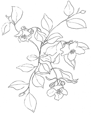 Origional sketch
