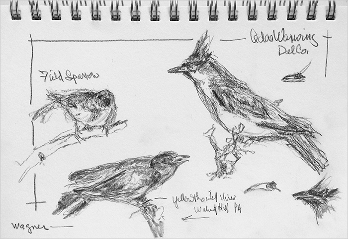 Image of bird sketches