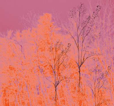 Basic image for trees.