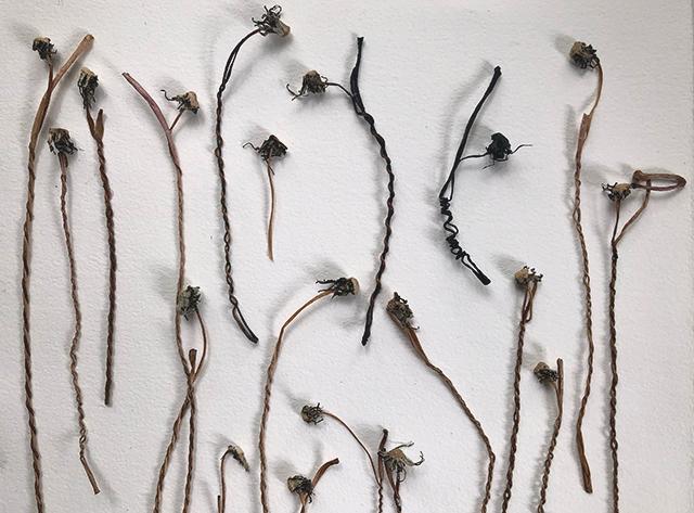 Image of dandelion cordage